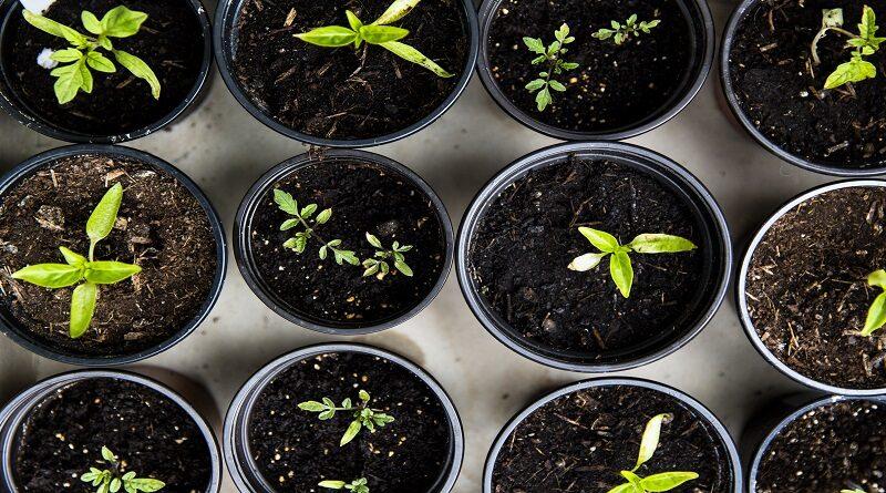 Postgraduate Courses in Horticulture
