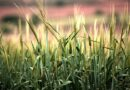 Postgraduate courses in Plant and Crop Sciences
