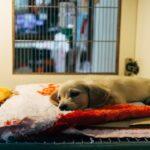 Postgraduate courses Veterinary Medicine
