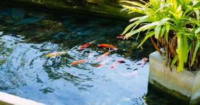 Postgraduate courses in Fish Production and Farming