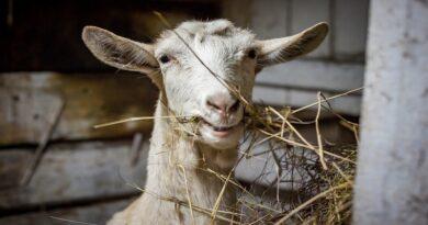 Postgraduate courses in Animal Husbandry