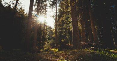 Postgraduate courses in Environmental Law