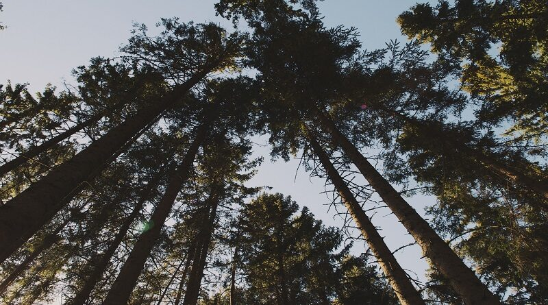 Postgraduate courses in Forestry
