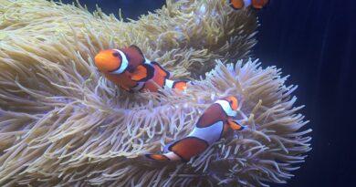 Postgraduate courses in Marine Biology