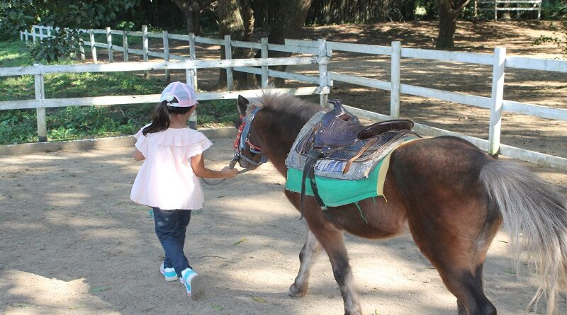 Postgraduate courses in Horse Keeping